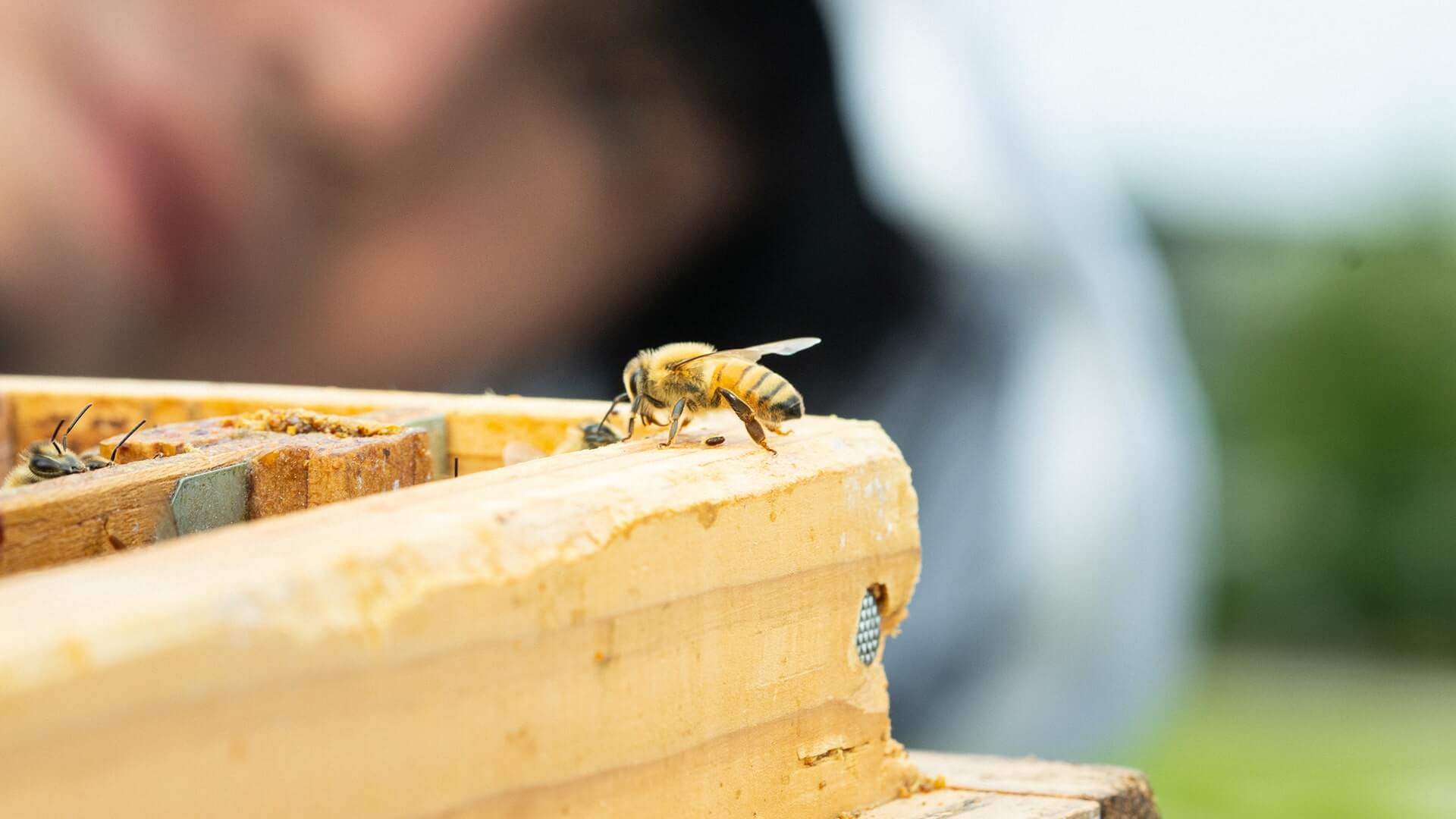 project-honeybees-01