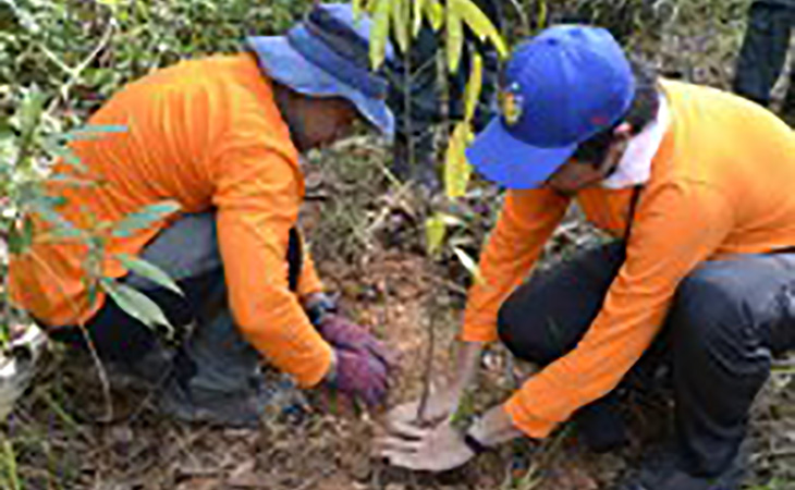green03-img-mangrove-planting